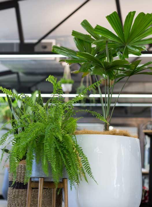 Canva warehouse garden design by Bell Landscapes, Sydney