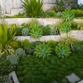 New home gardens and garden renovations. Bell landscapes offer garden design, installation, maintenance and vertical gardens for the greater Sydney area.