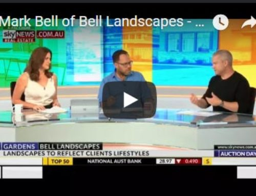 Mark Bell on Sky News
